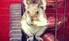 GuardianWitness - squirrel