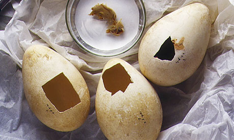 Penguin eggs