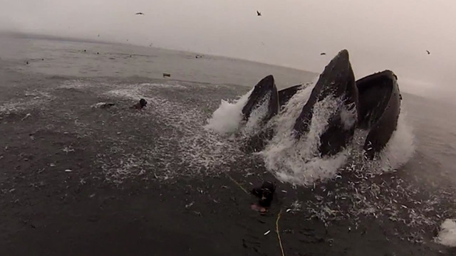 Whales almost eat two Divers