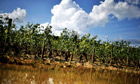 A vineyard near Pommard in Burgundy after hailstorms had wreaked serious damage
