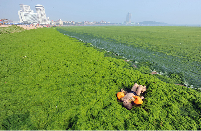 China's Record Algae Bloom