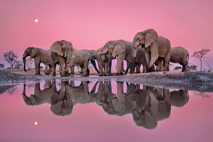 NHM Book: The Masters of Nature Photography : Frans Lanting Twilight Of The Giants
