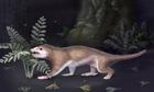 Jurassic squirrel evolution of mammals