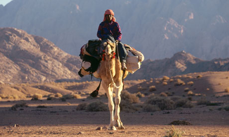 Camels may be source of Middle East's Sars-like virus