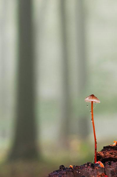 2013年英国野生动物摄影奖揭晓 - 月落台阁 - 月落台阁