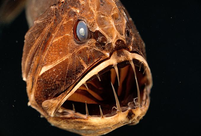 海洋深处的奇异生物(图) - 月落台阁 - 月落台阁