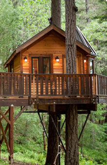 Airbnb: The Calypso Treehouse, Cave Junction, Oregan