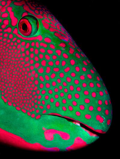 ?伦敦动物学会动物摄影奖2013(图) - 月落台阁 - 月落台阁