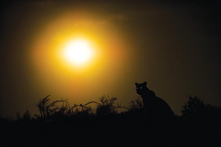 名摄影师洛克纳以镜头捕捉到卡拉哈里沙漠黑暗的一面 (图) - 月落台阁 - 月落台阁