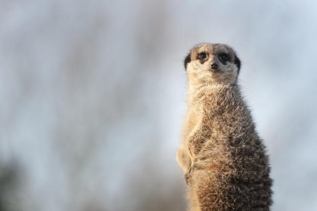 伦敦动物园是超过850种物种