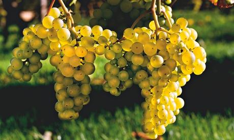 Gardens: vines