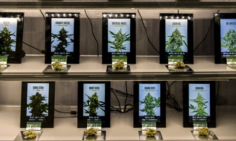 Various strains of marijuana are seen on display at The Green Solution Dispensary in Colorado.