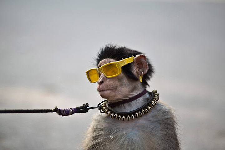 20 Photos: A trained monkey sits next to his owner as they wait for customers