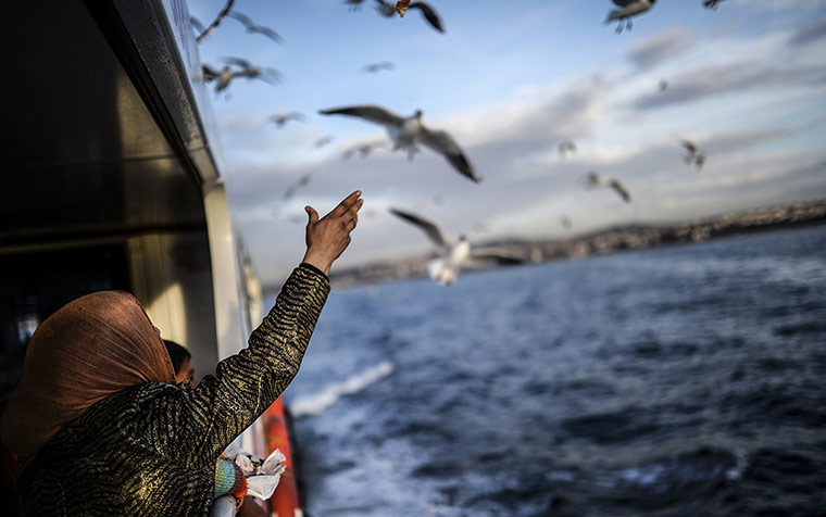 20 Photos: A Syrian refugee family feed seagulls while crossing the Bosphorus