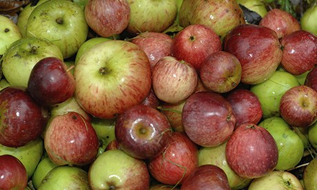 Kent apples