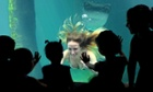 A performer dressed as a mermaid at the Sao Paulo's aquarium