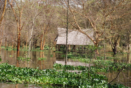 Flooding in Western Kenya, submerged buildings and Acacia trees.