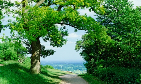 Box Hill in Surrey, in green belt land.