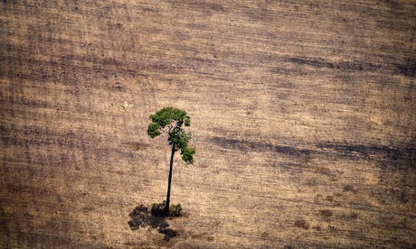 Tree in deforested area in middle of the Amazon jungle