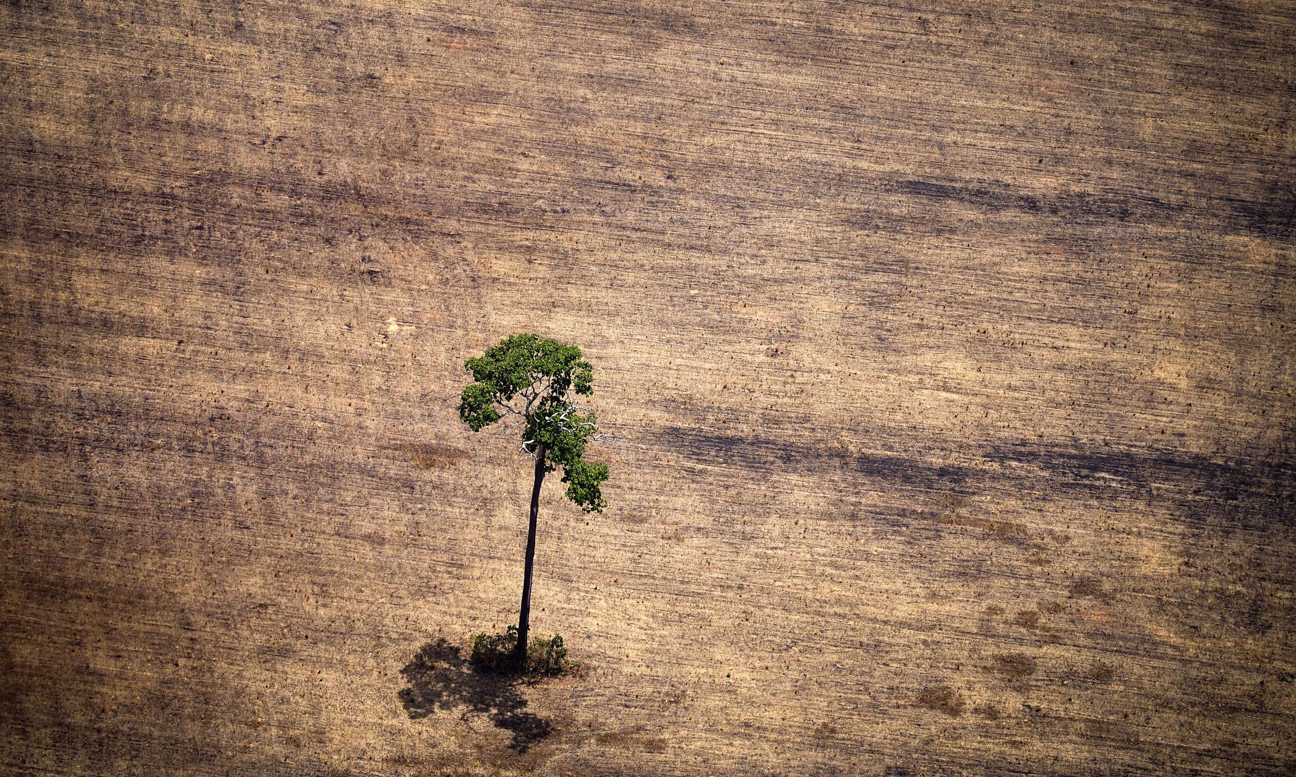 an analysis of the problem of deforestation Deforestation solutions deforestation is a persistent problem with a multitude of causes logging companies often use slash and burn techniques, without any concern for existing habitats ranchers see the land simply as cheap fertile land for grazing.