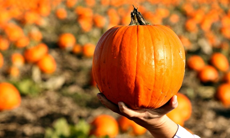An estimated 10 million pumpkins are grown in the UK every year – 95% will be carved into lanterns for Halloween.