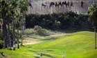 A golfer tees off as African migrants sit on top of a fence during an attempt to enter Spanish territories from Morocco.