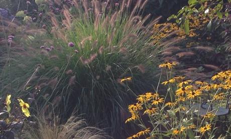 Kate Gould's garden.