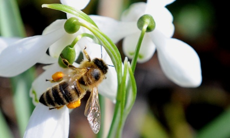 Bee parasite will flourish under global warming, study warns