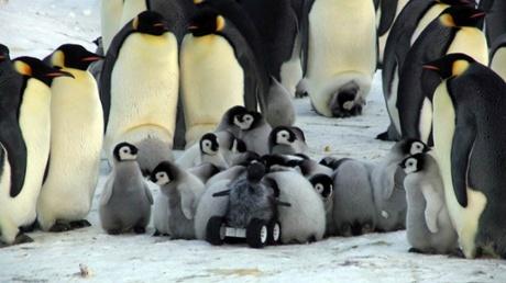 Замаскированный марсоход успешно проникает в «ясли» императорских пингвинов