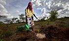 Watering a seedling in Kenya