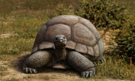 The Titanochelon, a new genus of giant tortoise