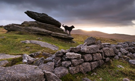 One of the black dogs of Dartmoor …