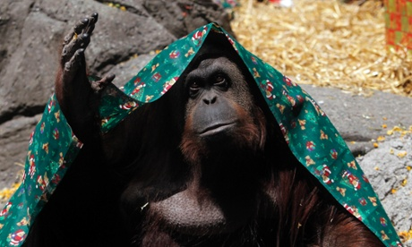 Orangutan in Argentina zoo recognised by court as 'non-human person'...