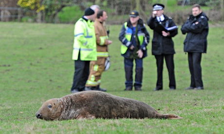 Marine mystery as seal found stranded in field 20 miles from the sea