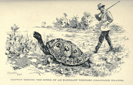 Celebrity pet: the rediscovery of Charles Darwin's long-lost ...
