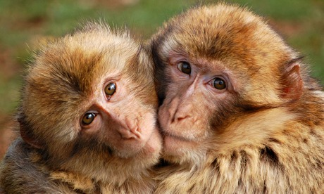Two monkeys hugging drawing - photo#6