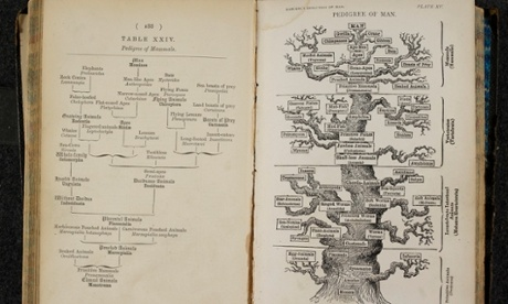 The Pedigree of Man. Ernst Haeckel, The evolution of man. London, 1879.