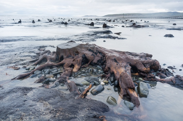 Ancient forest revealed by storms. The recent huge storms and gale force winds that have battered the coast of West Wales have stripped away much of the sand from stretches of the beach between Borth and Ynyslas.