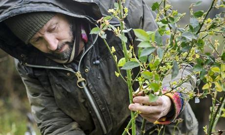 Dan Pearson pruning roses