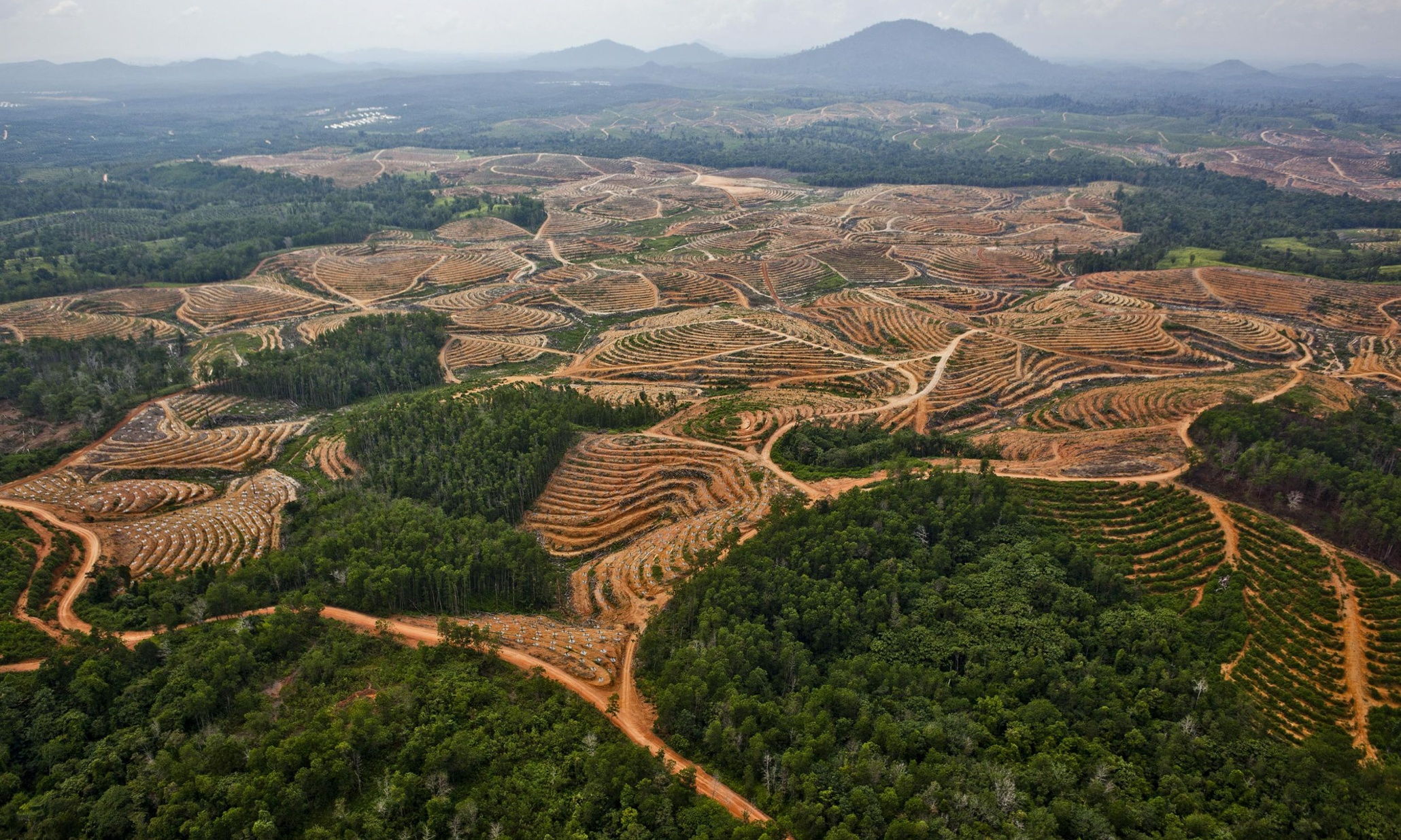 tropical deforestation Recent scandals involving giant corporations are revealing that tropical deforestation in their supply chains carries not only extraordinary ecological risk but also large financial risk that can.