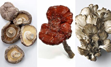 Mushroom composite