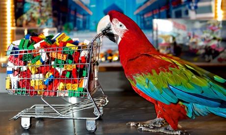 Zico the parrot
