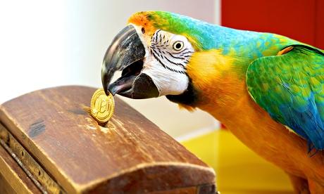 Jethro the parrot