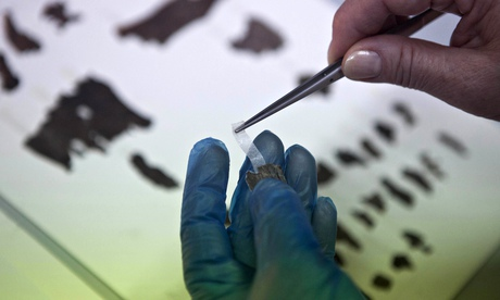 An Israel antiquities authority employee works on fragments of the Dead Sea scrolls
