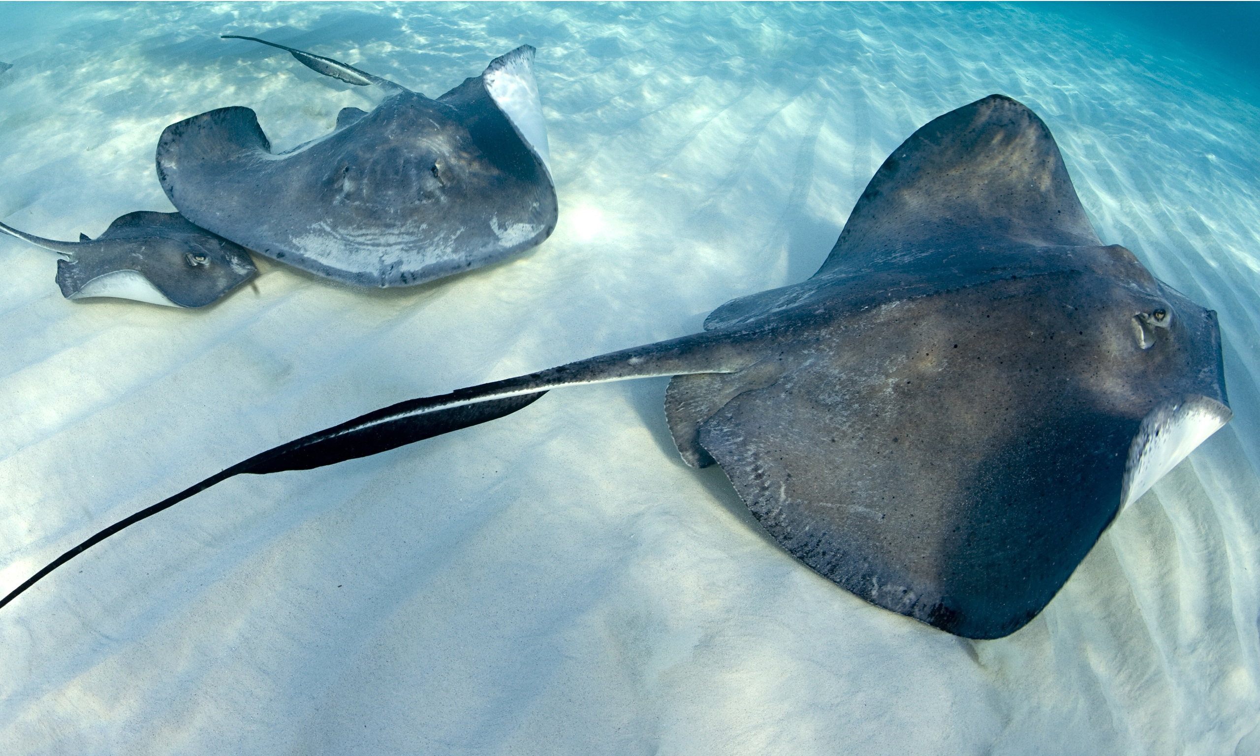 Why are handbag manufacturers using stingray skin? Lucy Siegle ...