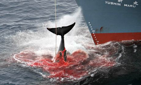 Japanese whaling