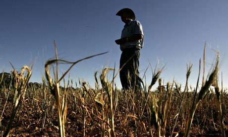 Farmer wheat