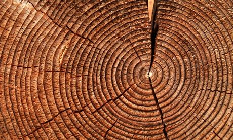 cross section through a tree trunk showing age rings