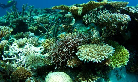 Highest Ocean Temperatures In 215 Years, Coral Reefs In Danger