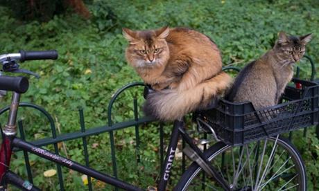 Tax-Deductible Kitties
